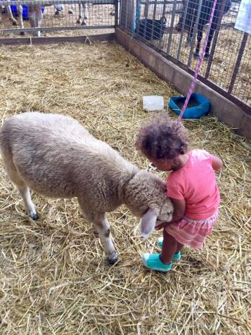Cuddling up to a sheep at the animal farm at Longstocking Brewery.