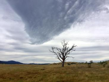 A lone tree with interesting clouds along the road at Thredbo.