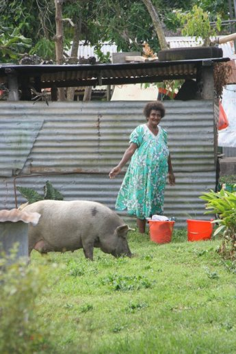 Pigs were a common sight..