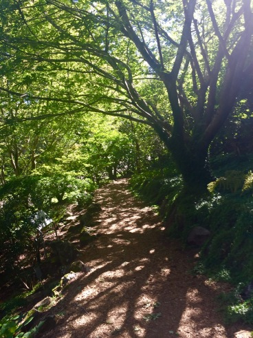 Love walks through the green forests